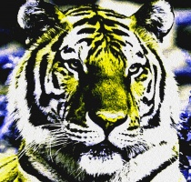 Today's Art Print: TIGER'