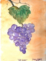 Today's Art Print: Wild Grapes'
