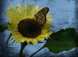 Title: Butterfly and Sunflower
