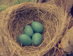 Title: Vintage Robin Nest and Eggs