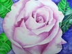 Title: Baby Pink Rose in Watercolor