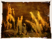 Title: Autumn Grasses
